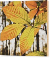 Glowing Beech Leaf Branch Wood Print