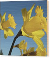 Glowing Daffodil Flowers Floral Art Baslee Troutman Wood Print