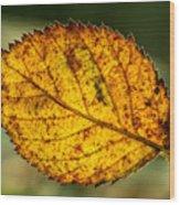 Glowing Fall Leaf Wood Print