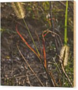 Glowing Foxtails Wood Print