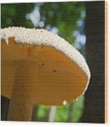 Glowing Mushroom Cap Wood Print