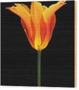 Glowing Orange Tulip Flower Wood Print