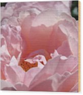 Glowing Pink Rose Flower Giclee Prints Baslee Troutman Wood Print
