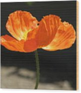 Glowing Poppy Wood Print