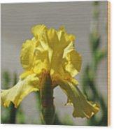 Glowing Yellow Iris Wood Print