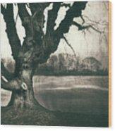 Gnarled Old Tree Wood Print