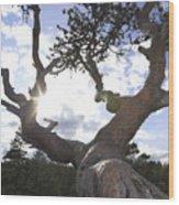 Gnarled Pine Tree And Sun Wood Print