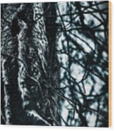 Gnarled Vines Surround A Tree Wood Print