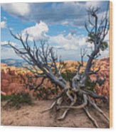 Gnarly - Bryce Canyon Wood Print