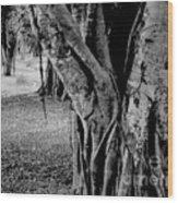 Gnarly Nature Wood Print