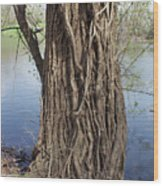 Gnarly Tree 2 Wood Print