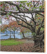 Gnarly Trees Of South Hilo Bay - Hawaii Wood Print