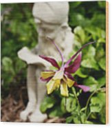 Gnome And Columbine Wood Print