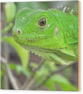Go Iguana Green 2 Wood Print