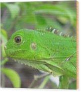 Go Iguana Green Wood Print