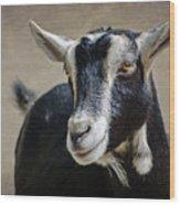 Goat 2 Wood Print