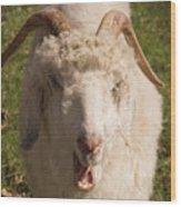 Goat Eating Wood Print