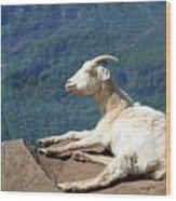Goat Enjoy The Sun Wood Print