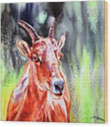 Goat From The Mountain Wood Print
