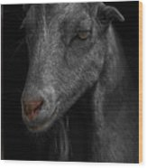 Goat In Red Barn Wood Print