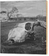 Goat Skull Wood Print