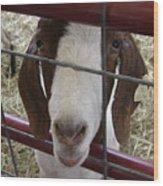 Goat2 Wood Print