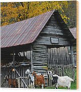 Goats At Rose Briar Farm Wood Print