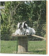 Goats Dreaming Of Trouble Wood Print