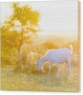 Goats Grazing At Sunset Wood Print