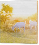 Goats Grazing In Field Wood Print