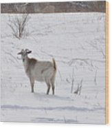 Goats In Snow Wood Print