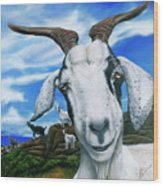 Goats Of St. Martin Wood Print