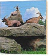 Goats On The Rock Wood Print