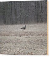 Gobbler Running Across The Field Wood Print
