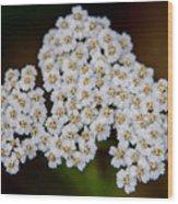 Gods Bridal Bouquet Wood Print