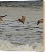 Bar Tailed Godwits Wood Print