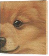 Goggie Pomeranian Wood Print