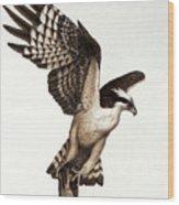 Going Fishin' Osprey Wood Print