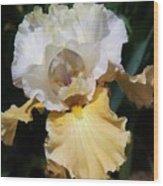 Gold And White Iris Wood Print