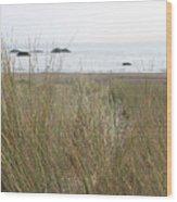 Gold Beach Oregon Beach Grass 7 Wood Print