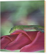 Gold Dust Day Gecko 1 Wood Print