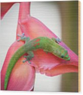 Gold Dust Day Gecko 2 Wood Print