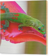 Gold Dust Day Gecko 3 Wood Print