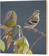 Gold Finch Wood Print