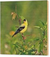 Gold Finches-2 Wood Print