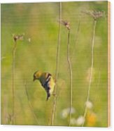 Gold Finches-5 Wood Print