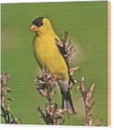 Gold Finches-6 Wood Print