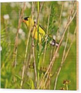 Gold Finches-8 Wood Print