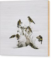 Gold Finches In Snow Wood Print