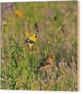 Gold Finches Wood Print